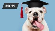 clever-investieren-intelligenzbestien-hund