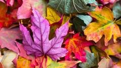 boerse-saisonalitaeten-september
