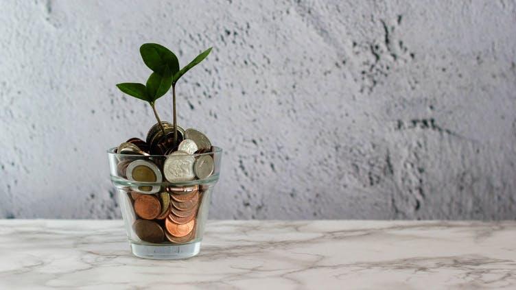 sparen-geld-pflanze